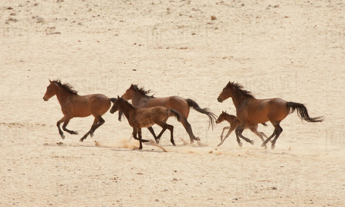 Virtual Reality Horses